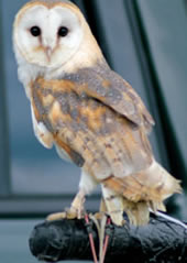 note-barnowl
